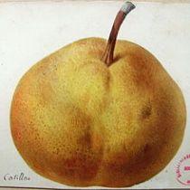 catillac